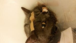 voedingssonde kat